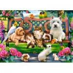 Puzzle  Castorland-018444