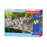 Puzzle  Castorland-13289