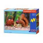 Puzzle  Castorland-13302