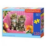 Puzzle  Castorland-13357