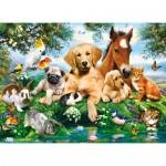 Puzzle  Castorland-222063