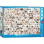 Puzzle  Eurographics-6000-0581