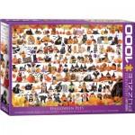 Puzzle  Eurographics-6000-5416